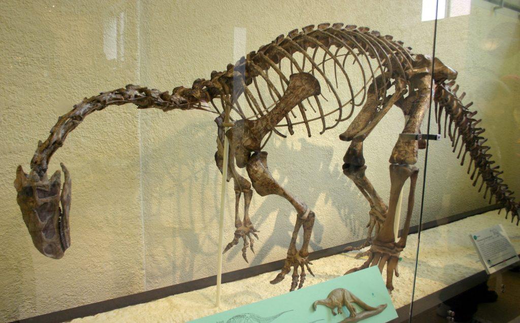 dinosaur bone ct scan